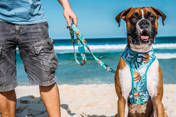 Summer-Inspired Collars and Leashes from Zee.Dog
