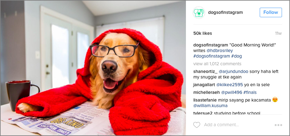Dogs-of-Instagram---3