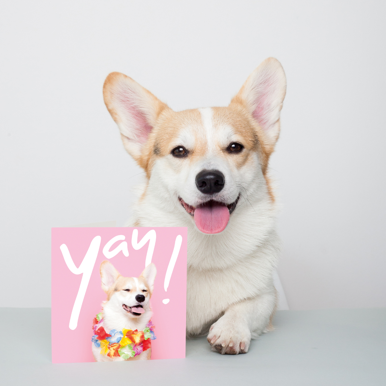 With Love From Winny the Corgi Greeting Card Collection