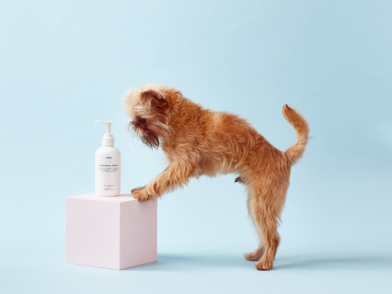 All-Natural, Vegan Dog Shampoo from Mr. Paw