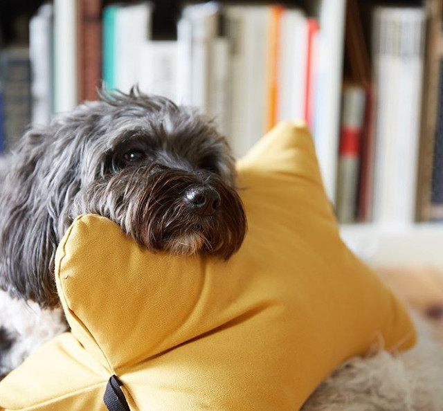 Dog Beds, Toys, and Travel Accessories from Patti Furry