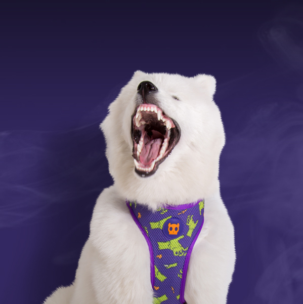 Limited Edition Halloween Zombie Accessories from Zee.Dog