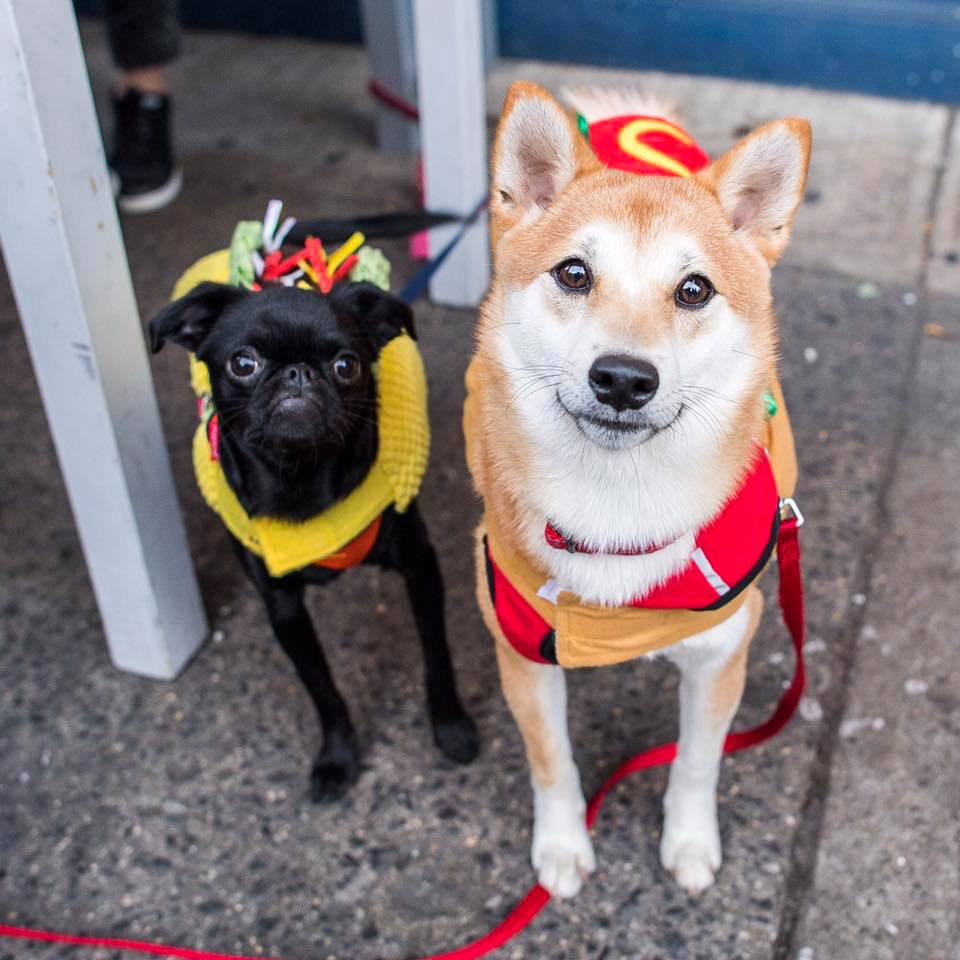 The Dogist: Tompkins Square Park Dog Halloween Parade