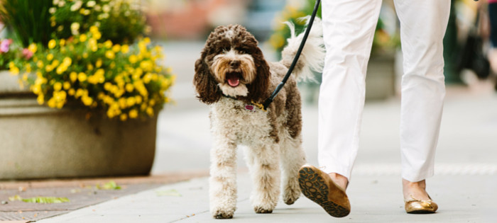 Pet Insurance: Why You Need It