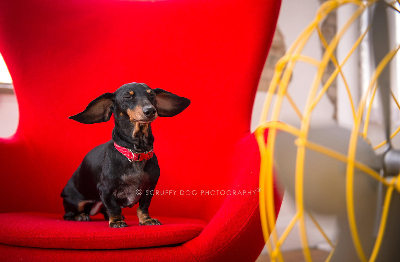BLOW Photo Series from Illona Haus of Scruffy Dog Photography