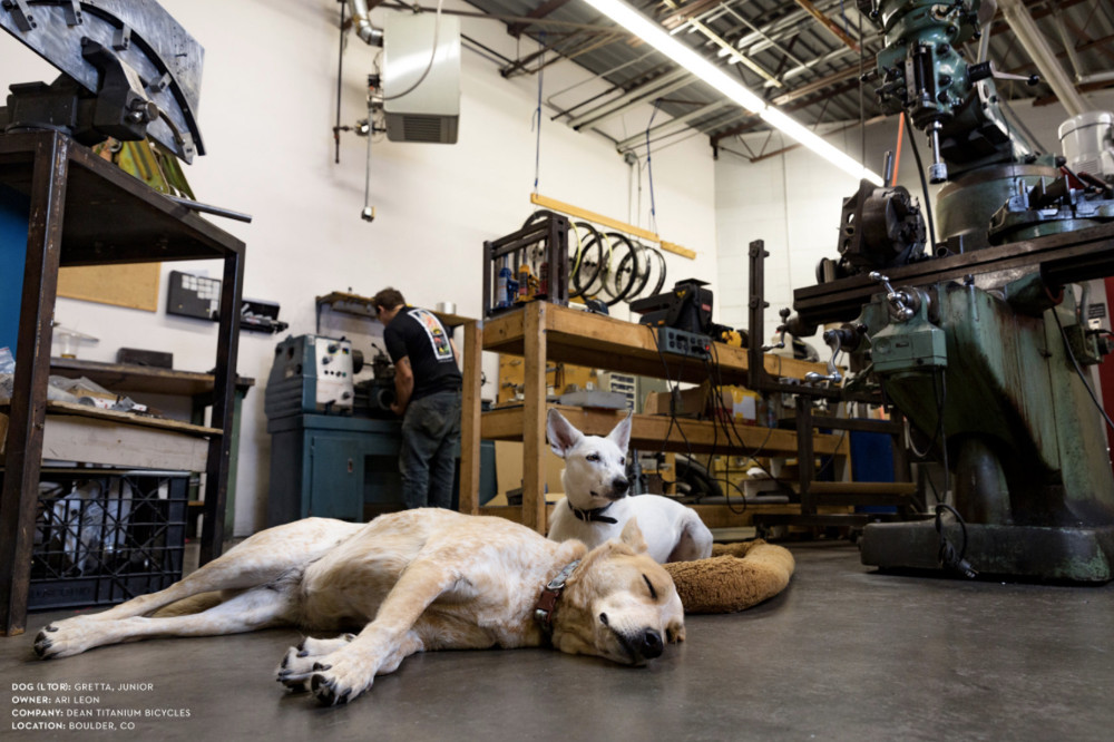 Dogs at Work Photo Series by Ty Foster