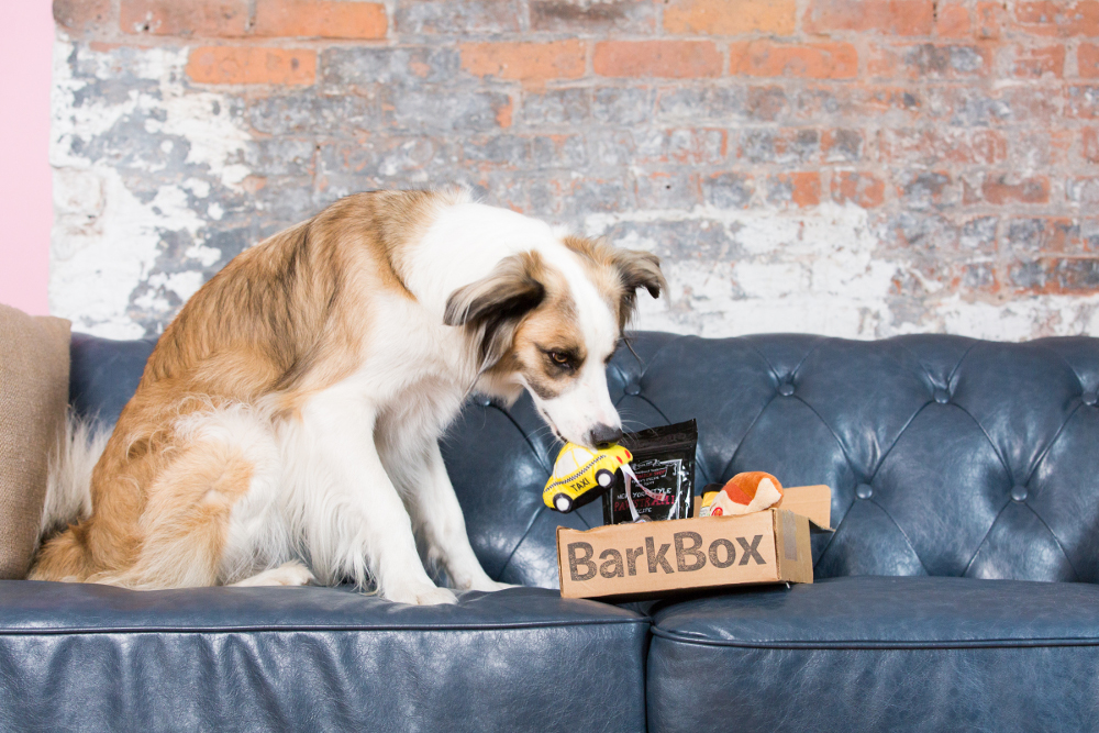BarkBox: The Best Monthly Subscription Box for Your Pup