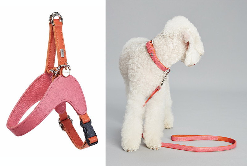 Colorful Leather Collars, Harnesses, and Leads from Hello Jello