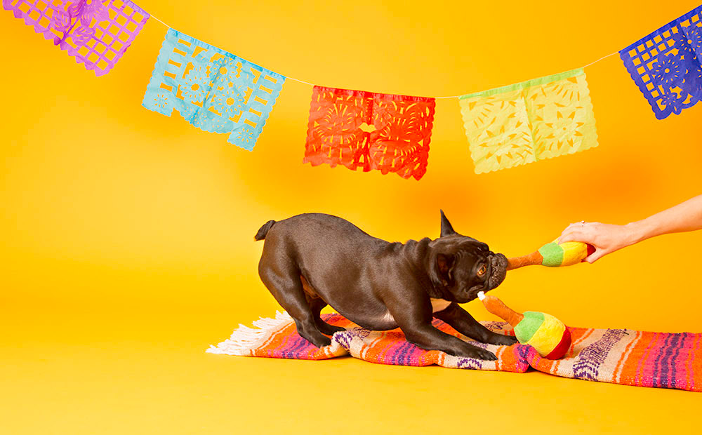 Squeak-o de Mayo Toy Collection from BarkShop