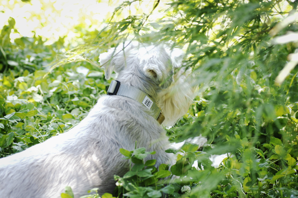 Durable Handmade Collars and Leads from Dog + Bone