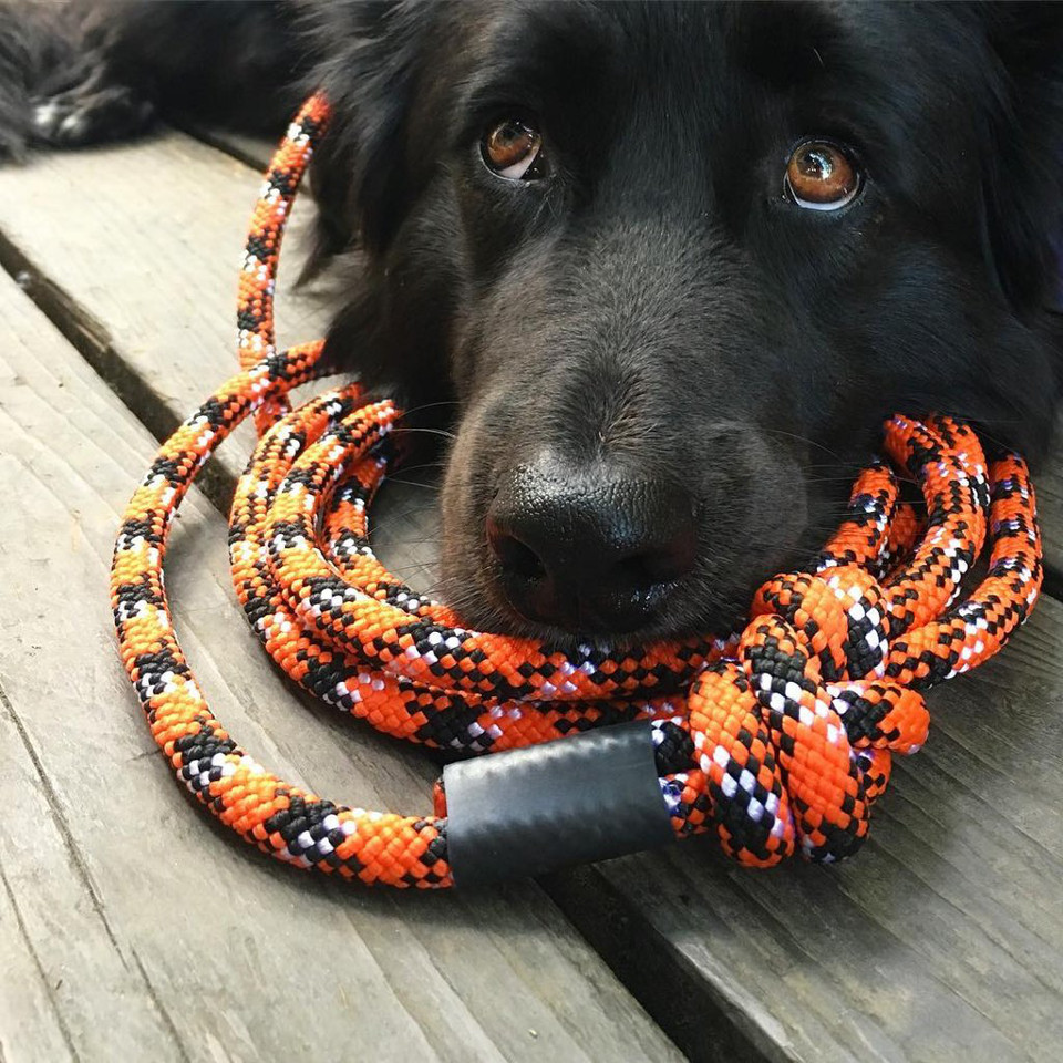 Climbing Rope Leashes and Collars from Wilderdog