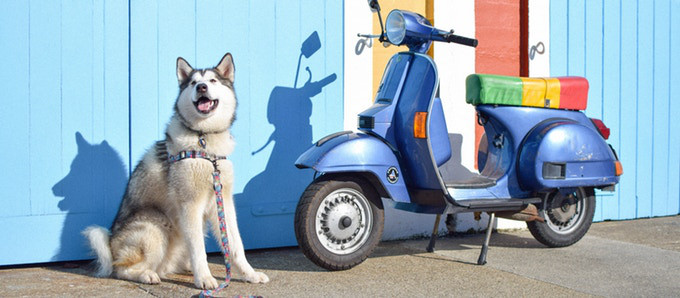 Fun & Functional Dog Products from Wolves of Wellington