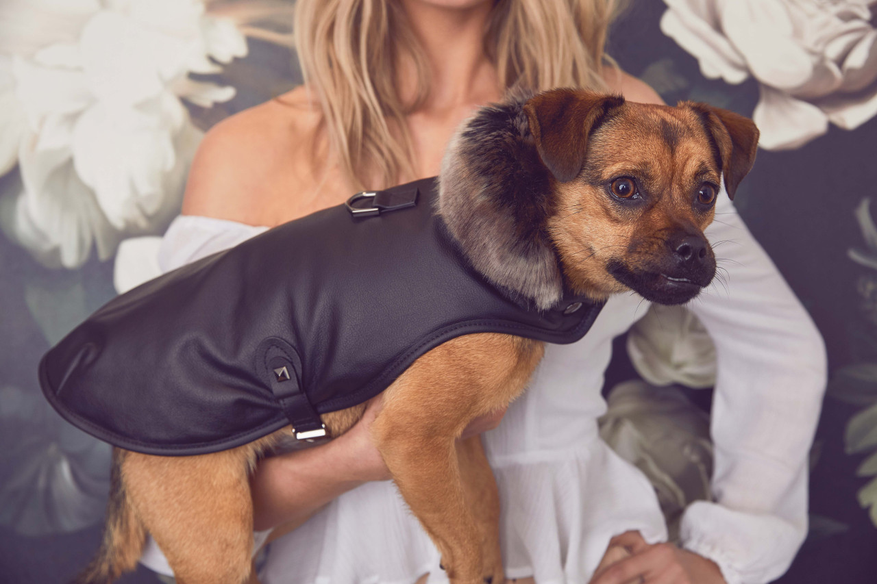 For The Furry: A Modern Pet Boutique