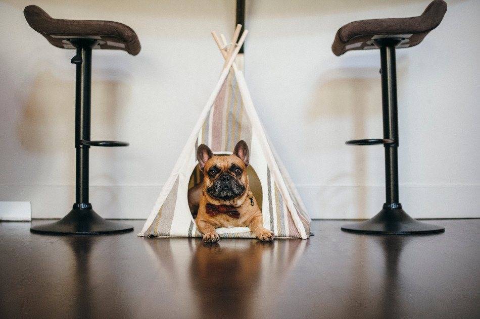 Horizon Pet Teepee from P.L.A.Y.