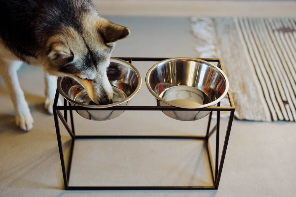 Y Bowl Elevated Feeder from HELLO PETS