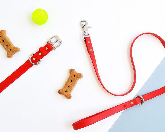 Water-Resistant Collars and Leashes from Loop