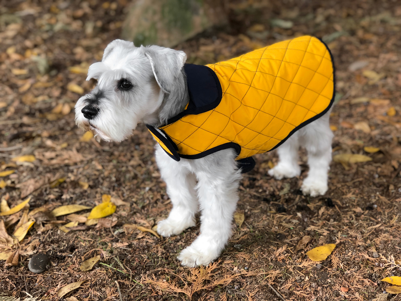 Andean Peaks Water Resistant Dog Coat from Paco & Lucia