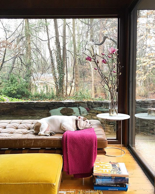 Instagram Love: Modern Pup