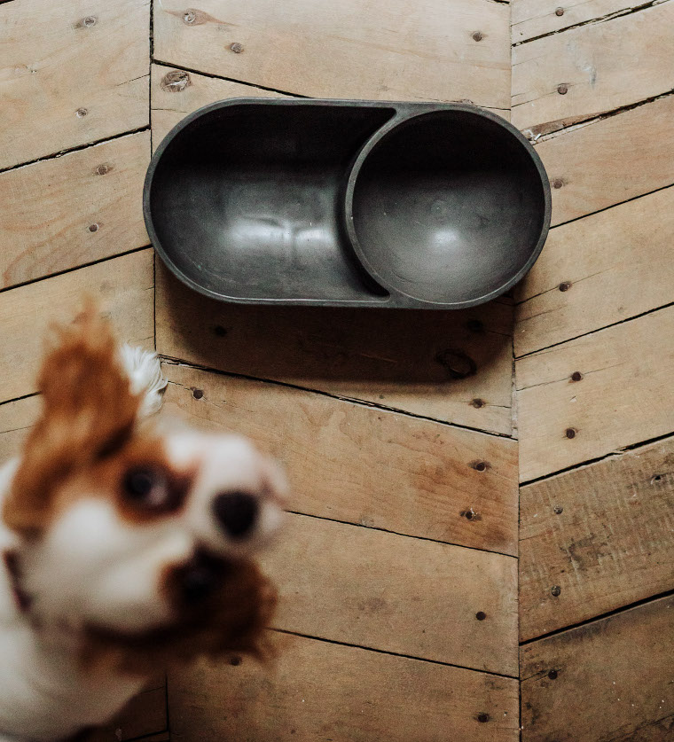 Cast Concrete Dog Bowls from HELLO PETS