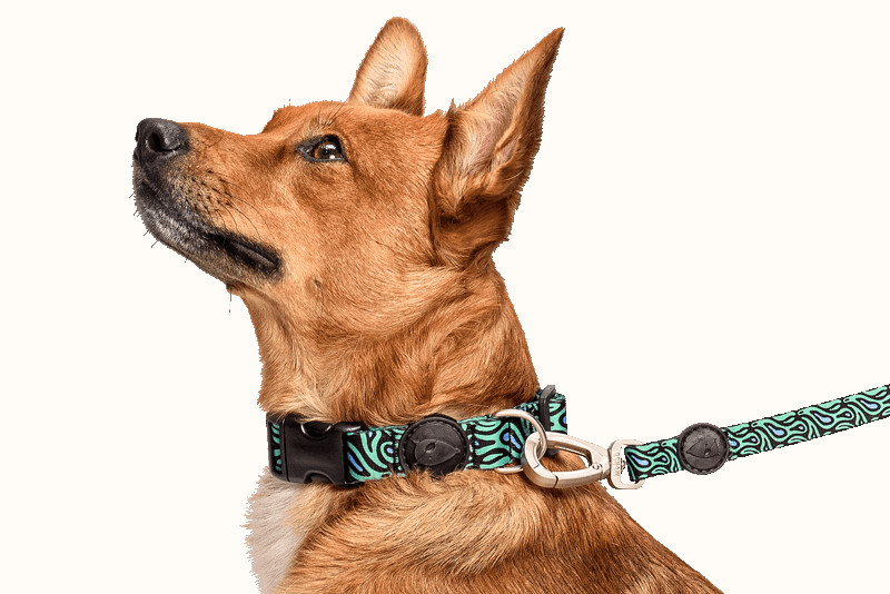 Colorful Dog Accessories from Morso