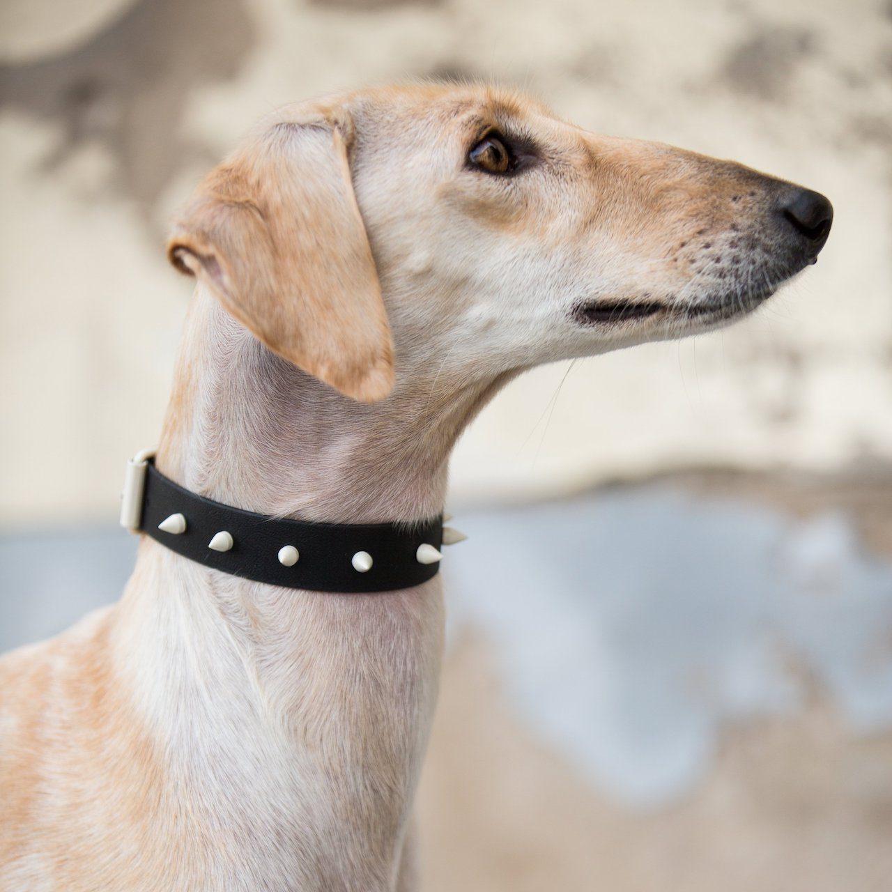Vegan Spiked Dog Collars from Sighthound Squad