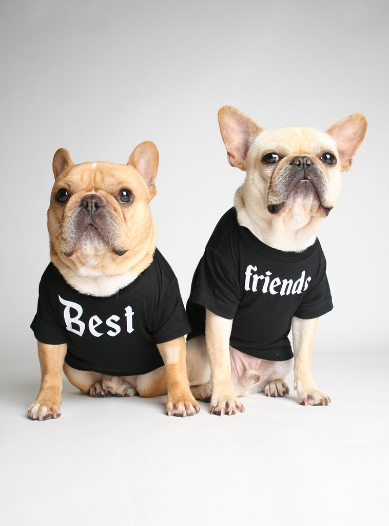 Slogan Dog Tees from Club Huey