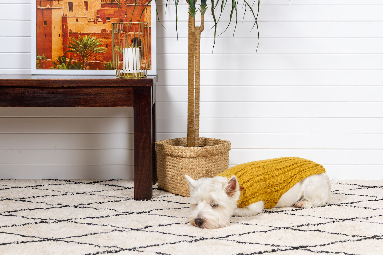 Modern Cable Knit Dog Sweaters from Pooky & Boo