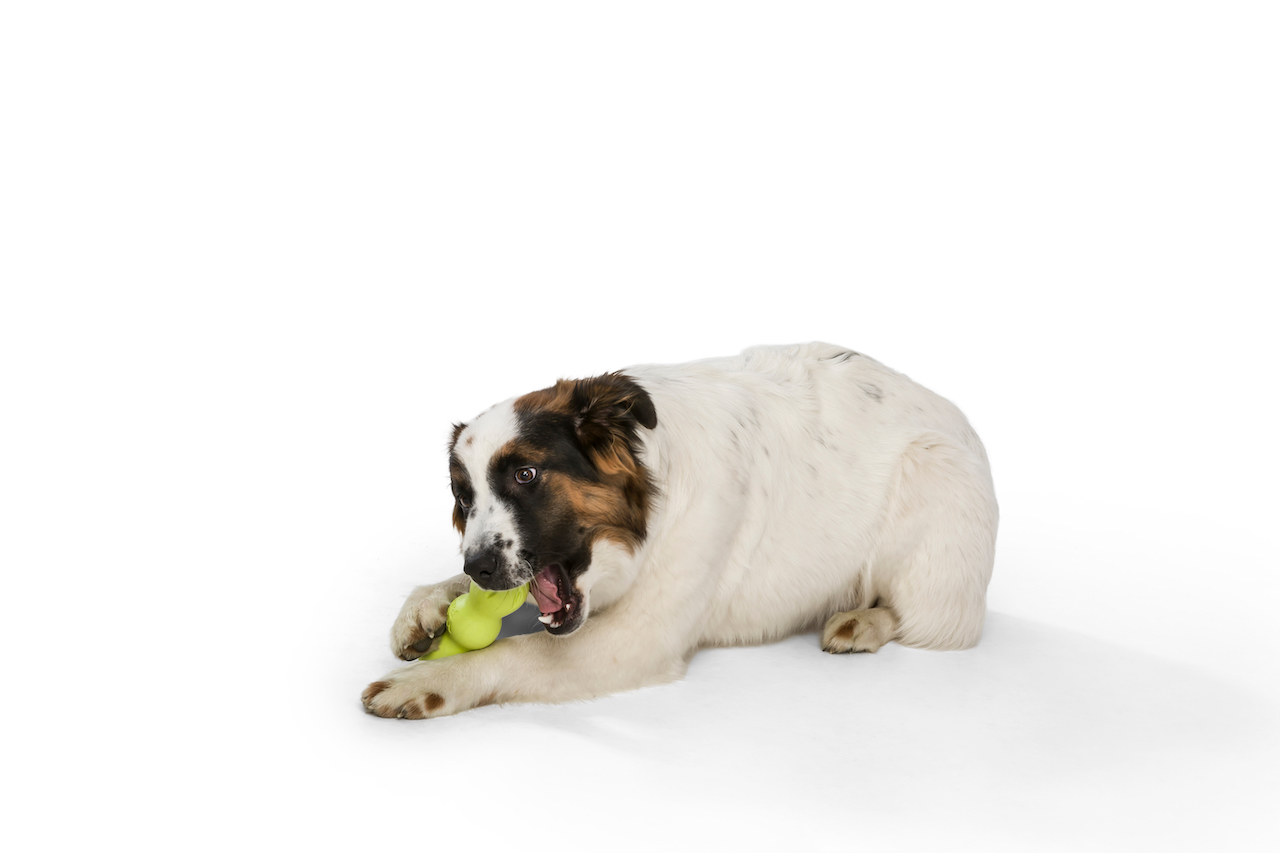 Rumpus Tough Chewers Dog Toy from West Paw