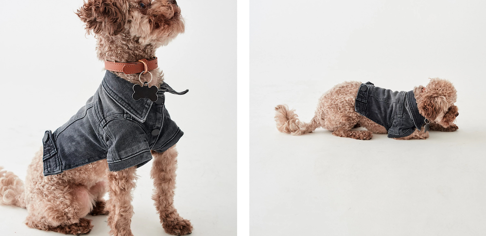 Denim Trucker Jackets for Dogs from DL1961