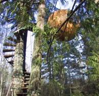 Tree Pods