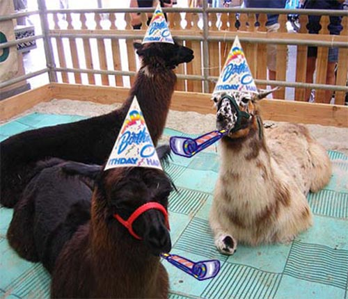 Happy 6th Birthday To Us!