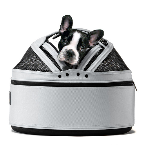 Sleepypod Ugliest Pet Bed Giveaway in main  Category