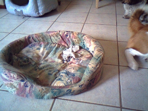 Vote for the Ugliest Pet Bed in main  Category