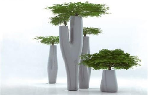 Missed Trees