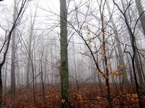 modfrugal-woods
