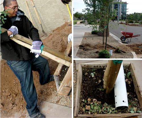 5-dd-eeko-planting1