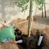 5-dd-eeko-planting2