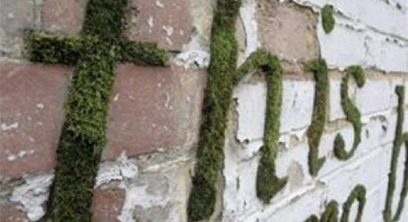 Forget Lawns, Go For Creative Grass