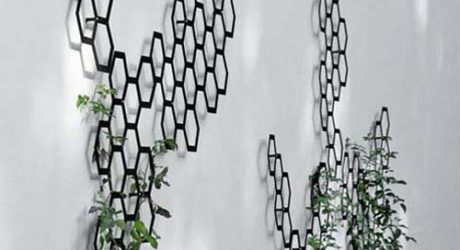 Use that Wall: The Trellis Re-invents Itself