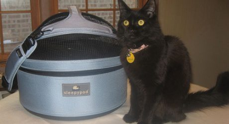 Roxy With Her Sleepypod!