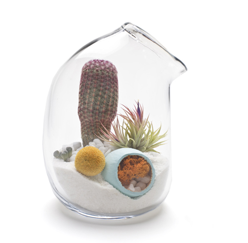 litill-terrariums-5