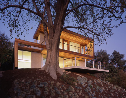 Tree House in California by Standard in architecture  Category