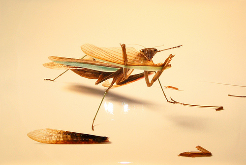Entomologia in main art  Category