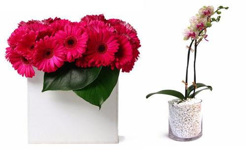floralart-la-1
