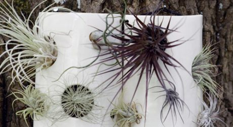 Air Plant Wall Tiles by Pigeon Toe Ceramics