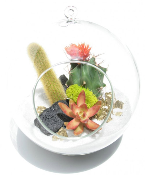 tend-living-terrarium