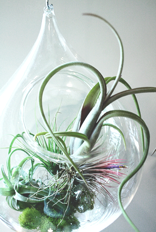 tend, air plants, orbs
