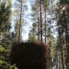 tree-hotel-birds-nest-2