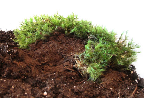 james-modern-terrariums-moss
