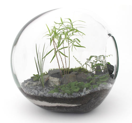 James Modern Terrariums